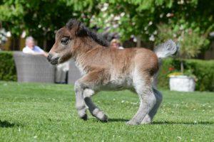 sommerurlaub-pferde-kinder-pony