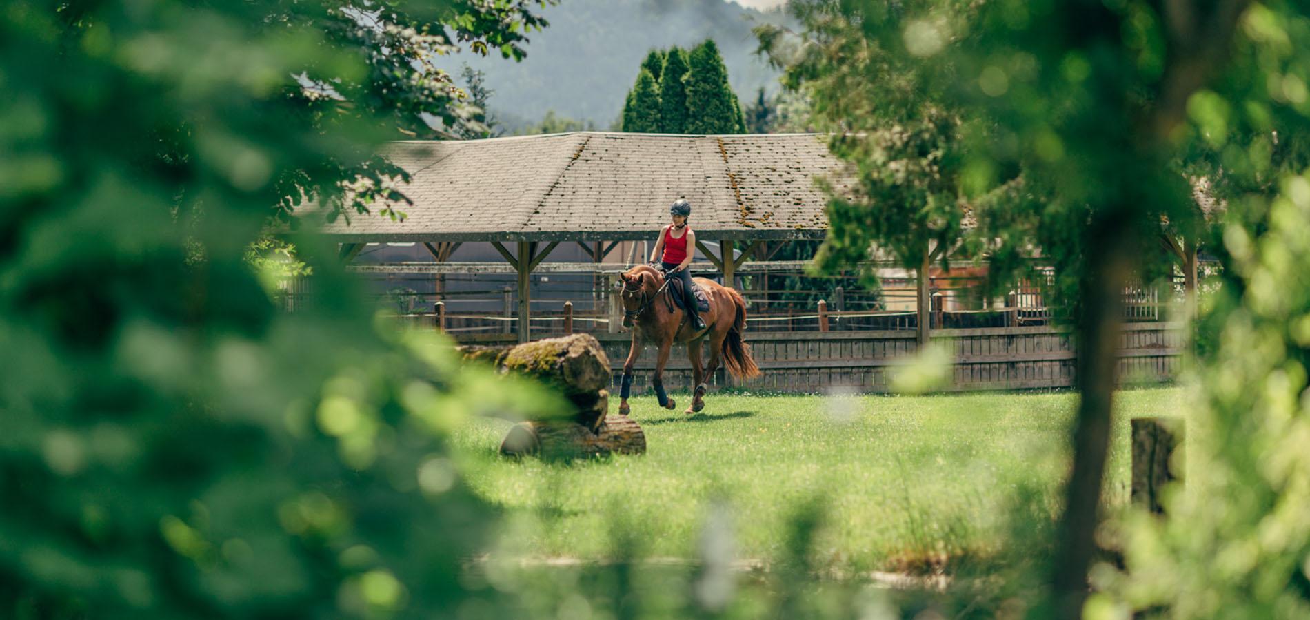 reiturlaub-pferde-kärnten-sommer